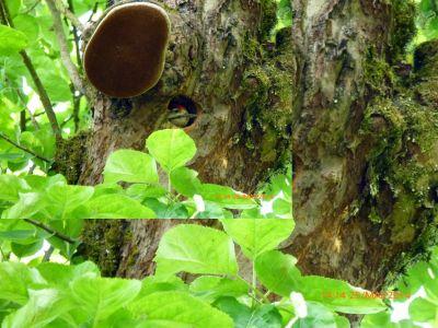 Bild Ferienhaus NATURPUR Bayerischer Wald