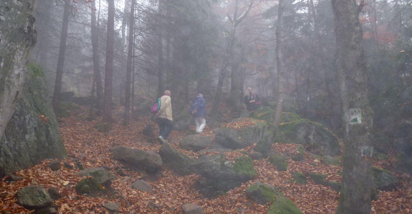Ferienhaus NATURPUR Bayerischer Wald