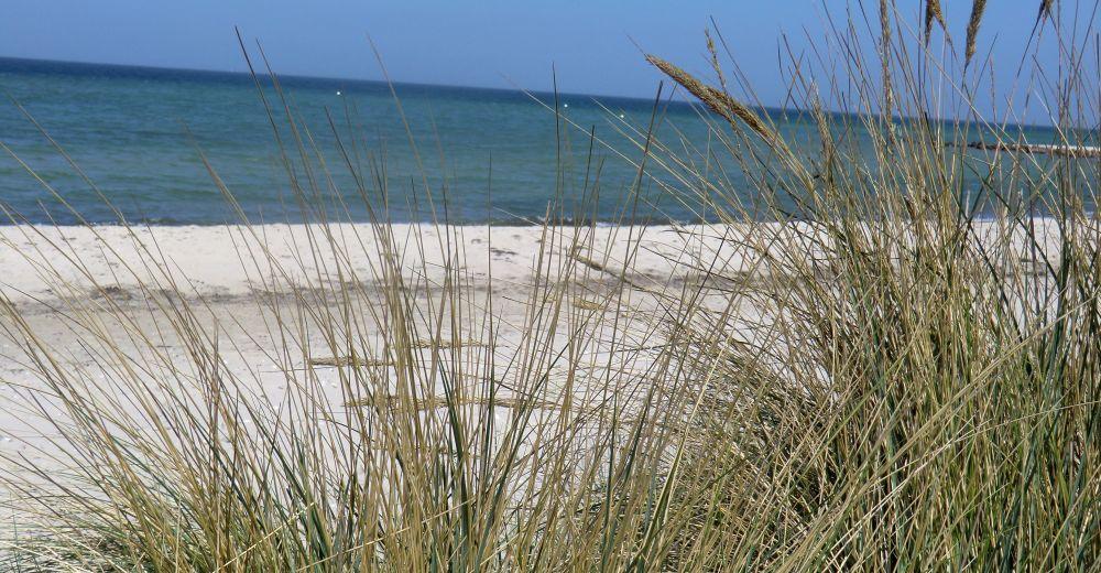 Ferienwohnung mit Garten an der Ostsee