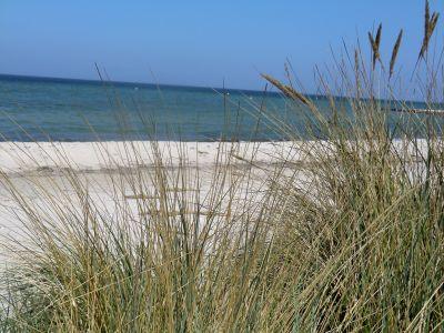 Bild Ferienwohnung mit Garten an der Ostsee