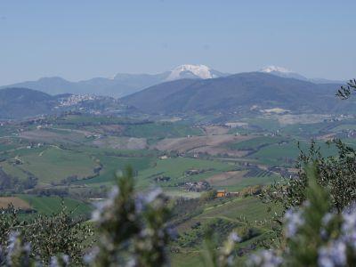 Bild Poggio-delle-Querce - Eichenhügel Fewo