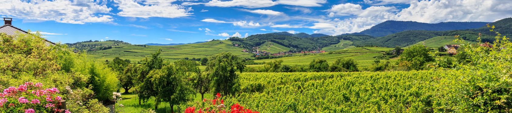 Bild von Elsass-Champagne-Ardennen-Lothringen
