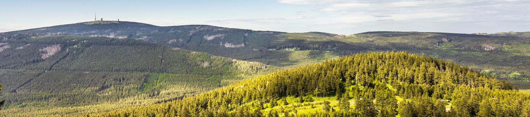 Bild von Harz