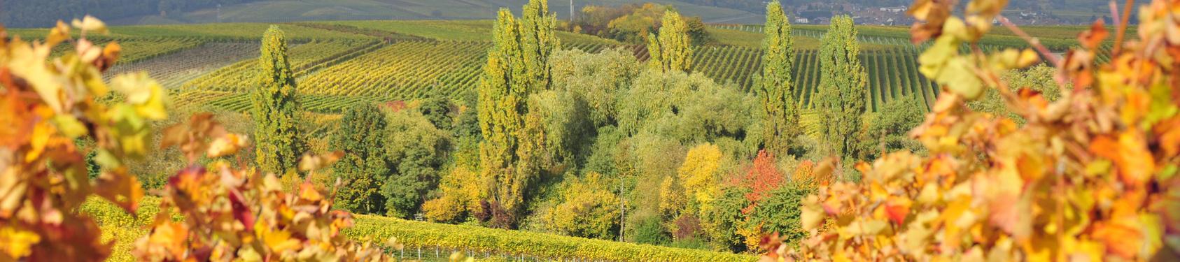 Bild von Südliche Weinstraße